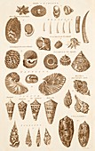 Shell Forms