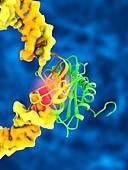 TATA box-binding protein complex