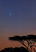 Comet ISON,November 2013