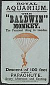 The Baldwin Monkey