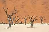 Dead Vlei in Namib-Naukluft National Park
