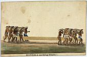 Hammals carrying timber