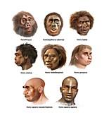 Human evolution,artwork