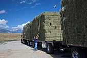 Transporting bales of hay