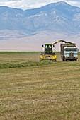 Harvesting alfalfa crop