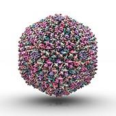 Adenovirus particle,artwork