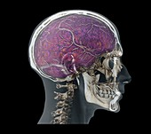 Human head,MRI and 3D CT scans