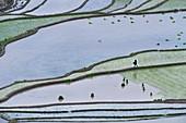 Hani Rice Terraces near Yuanyang