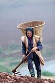 Woman farm worker harvesting potatoes