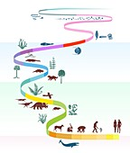 Geological timescale and life