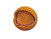 Drug delivery liposome,artwork