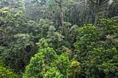 Tropical lowland rainforest,Malaysia