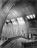The Natural History Museum,1882