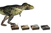 Dinosaur and fossil footprints,artwork