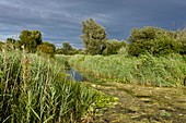 Ditch and reedbeds,Wicken Fen,UK