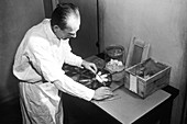 Experiments on mice,USA,1944