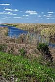 Stormwater Treatment Area,Florida,USA