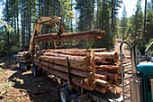 Logging redwood trees,California,USA