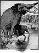 Buffalo fighting a mammoth,illustration