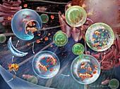 Cellular autophagy,illustration