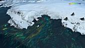 Ice shelf ocean currents,Antarctica