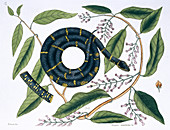 Chain snake,illustration