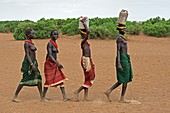 Young Dassenech girls carrying water