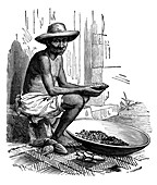 Cocoa bean processing,19th century