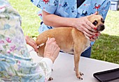 Charity dog vaccination event,USA