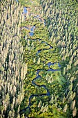 Boreal forest,Northern Alberta,Canada