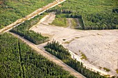 Boreal forest felled for a tar sands mine