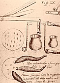 Blood-letting instruments,17th century