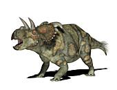 Albertaceratops dinosaur,illustration