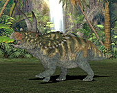 Coahuilaceratops dinosaur,illustration