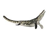 Tylosaurus prehistoric marine lizard