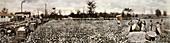 Cotton plantation,1914