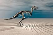 T. rex Dinosaur Skeleton,illustration