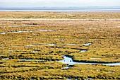 The salt marsh or Merse at Caelaverock