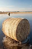 Straw bales on a flooded field