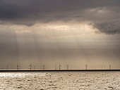 An offshore wind farm in Dutch waters