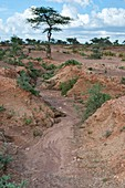 Soil erosion due to water runoff