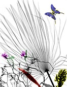 Plants and butterfly,X-ray