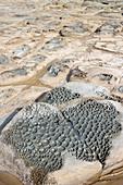 Coastal erosion patterns in rock