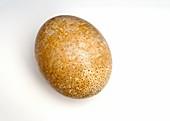 Ostrich egg,specimen