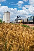Grain elevators and railway