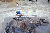 Ashfall Fossil Beds display
