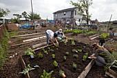 Creating community garden,USA