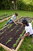 Community garden volunteers weeding