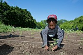 Young boy planting tomatoes