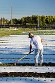 Worker on an organic farm,USA